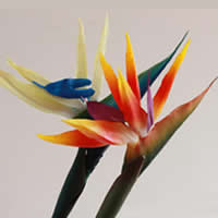 Artificial Flower Home Decoration, Rubber, with Plastic, Queens bird-of-paradise Flower, more colors for choice, Sold By PC
