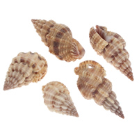 Trumpet Shell Beads, natural, 14x28x13mm-20x43x17mm, Hole:Approx 1mm, Approx 33PCs/KG, Sold By KG