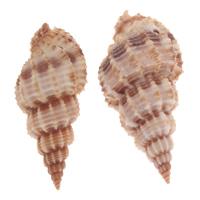 Trumpet Shell Pendant
